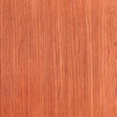Texture of cherry, wood grain — Stock Photo