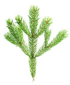 Xmas fir tree branch isolated on white background — 图库照片