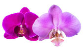 Lilac and violet orchids is isolated on the white background — Stock Photo