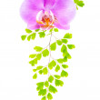 Lilac orchid and green fern isolated on the white background — Stock Photo