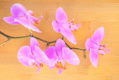 Branch lilac orchid on bamboo wooden background — Stock Photo