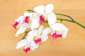 Branch white with red orchid on bamboo wooden background — Stock Photo