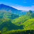 Stock Photo: Beautiful landscape of teplantations in India, Kerala, Mun