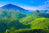 Beautiful landscape of the tea plantations in India, Kerala, Mun — Stock Photo