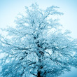 Winter tree on the blue sky background — Stock Photo