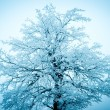 Stock Photo: Winter tree on the blue sky background