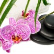 Spa still life with orchid, black stones, green leaves and whit — Stock Photo