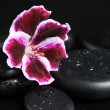 Постер, плакат: Spa still life with beautiful deep purple flower and zen stones