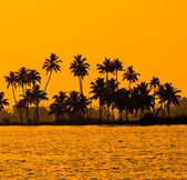 Silhouette of coconut palm trees at golden tropic sunset, Kerala — Stockfoto