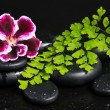 ������, ������: Spa concept of beautiful deep purple flower green branch and ze