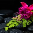 Spa still life with green branch of maidenhair, pink with red fu — Stock Photo