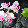 Spa concept of white with red orchid (mini phalaenopsis) flower, — Stock Photo