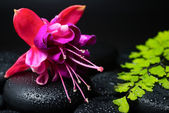 Spa concept of beautiful fuchsia flower, green branch and zen st — Stock Photo