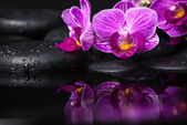 Spa still life of beautiful branches stripped lilac orchid (phal — Stock Photo
