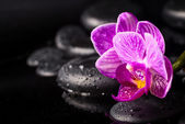 Spa concept of zen stones, blooming twig lilac stripped orchid,  — Zdjęcie stockowe