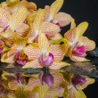 Spa concept of beautiful yellow with red stripped orchid (phalae — Stock Photo #46640481
