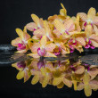 Spa concept of beautiful yellow with red stripped orchid (phalae — Stock Photo #46640737