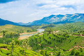 Beautiful landscape of the tea plantations, mountain and the riv — Stock Photo