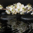Spa set of zen stones, blooming fresh twig of plum with ripple r — Stock Photo