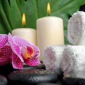 Güzel spa kavramı düşer, zen taşlarla, çiçek açan dal — Stok fotoğraf