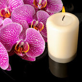 Beautiful spa still life of blooming twig stripped violet orchid — Stock Photo