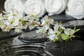 Spa set of blooming fresh twig plum on zen stones and white towe — Stock Photo