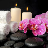 Beautiful spa concept of zen stones with drops, blooming twig of — Stock Photo