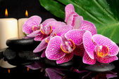 Spa setting of blooming twig stripped violet orchid (phalaenopsi — Stock Photo