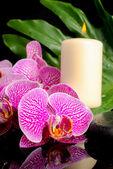 開花小枝滴、禅石の美しいスパの概念 — ストック写真