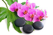 Beautiful spa still life of blooming branch stripped violet orch — Stock Photo