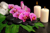 Spa set of blooming twig of stripped violet orchid (phalaenopsis — Photo