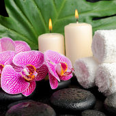 Spa setting of twig stripped violet orchid (phalaenopsis ), zen — Stock Photo