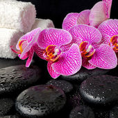 Spa setting of blooming twig of stripped violet orchid (phalaeno — Stock Photo