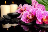 Spa ayarı çiçeklenme dal, mor orkide (phalaenopsi elimden alındı — Stok fotoğraf