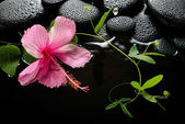 Spa concept  of  blooming pink hibiscus, green tendril passionfl — Stock Photo