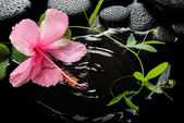 Beautiful spa concept  of pink hibiscus, green tendril passionfl — Stock Photo