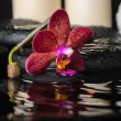 Постер, плакат: Spa concept of deep purple orchid phalaenopsis zen stones wit
