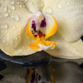 Beautiful spa still life with yellow flower orchid, phalaenopsis — Stock Photo