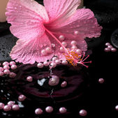 Beautiful spa setting of pink hibiscus, candles, zen stones with — Stock Photo