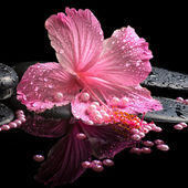 Beautiful spa still life of pink hibiscus, drops and pearl beads — Stock Photo