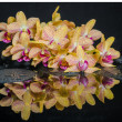 Spa concept of beautiful yellow with red stripped orchid (phalae — Stock Photo #50512445