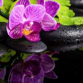 Beautiful spa setting of stripped lilac orchid (phalaenopsis), b — Photo