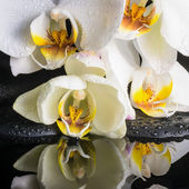 Beautiful spa setting of white orchid (phalaenopsis), green bran — Stock Photo