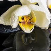 Beautiful spa setting of white orchid (phalaenopsis), zen stones — Stock Photo