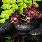 Beautiful spa concept of deep cherry orchid (phalaenopsis), gree — Stok fotoğraf