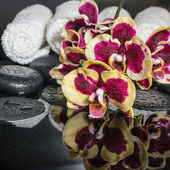 Beautiful Spa concept of zen stones, blooming twig orchid, phala — Stock Photo