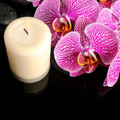 Beautiful spa still life of blooming twig stripped violet orchid — Stok fotoğraf