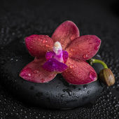 Beautiful spa concept  of deep purple orchid (phalaenopsis) and  — Stock Photo