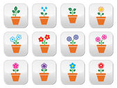 Flower, plant in pot vector colorful icons set — Stock Vector