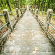 Stock Photo: Stairway in the jungle